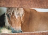 De ultieme gids voor Temecula, Californië • The Blonde Abroad